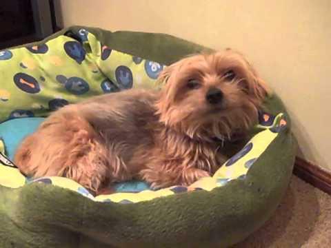 Teaching Spanish: My Dog Cookie's Health