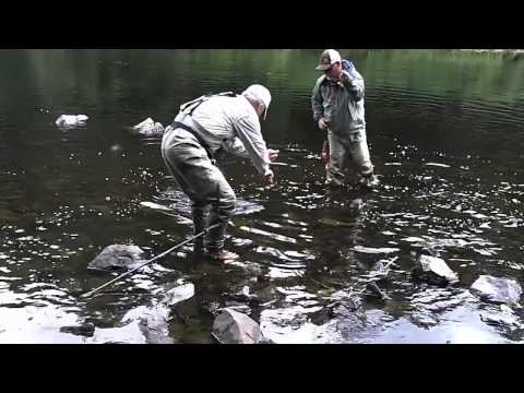 Salmon Fishing: Fly fishing lessons in Alaska