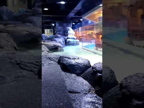 Jakarta Aquarium - Pingoo
