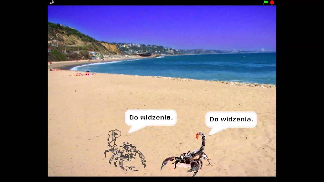 Skorpiony spotykają się ze sobą