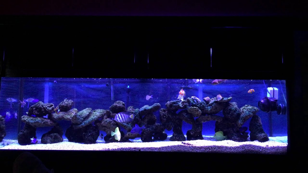125 gallon saltwater fish only aquarium youtube for Fish only saltwater tank