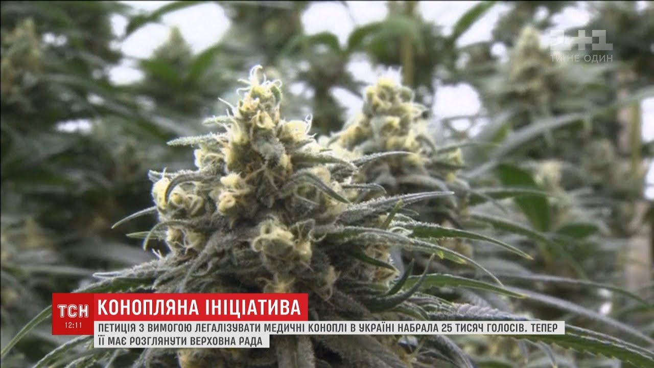 Марихуана петиция медицинская hd марихуаны
