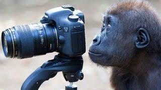 31 animals wanna be photographer
