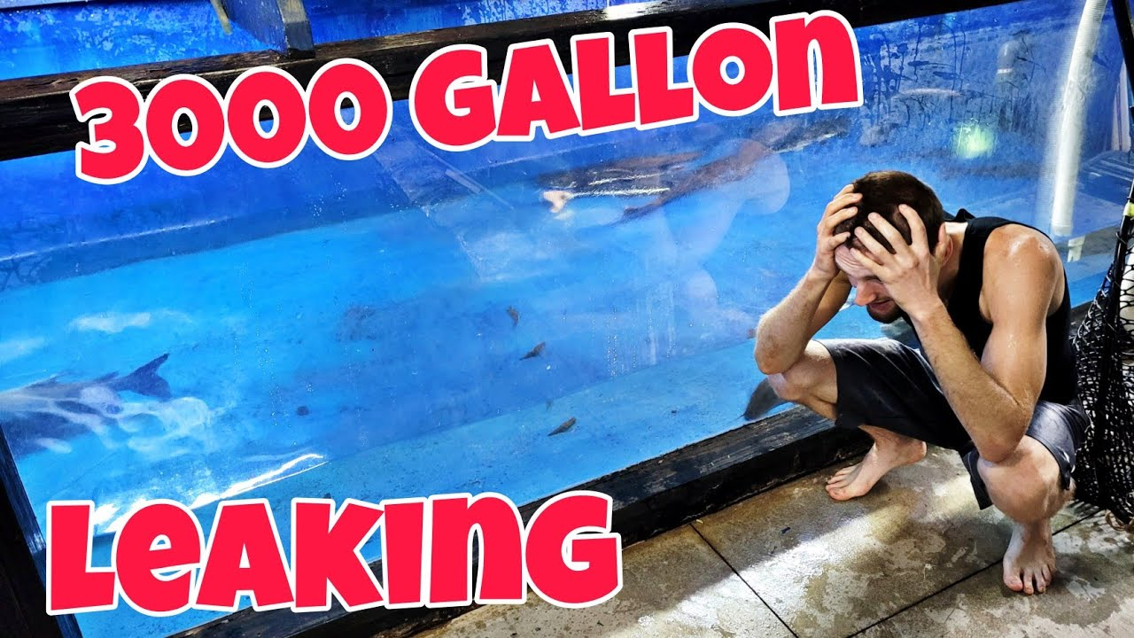 3000 Gallon Monster Aquarium Sprung a Leak!!!