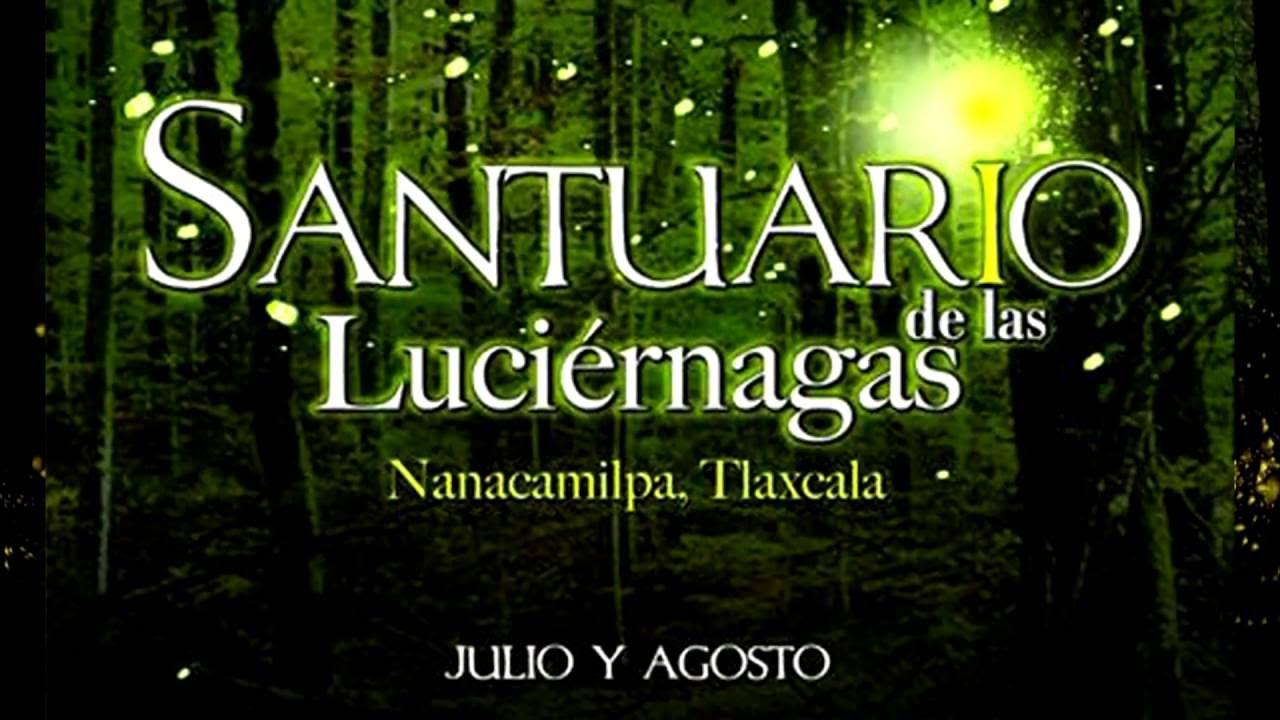 El Santuario de Las Lucirnagas en Tlaxcala Julio y agosto  YouTube