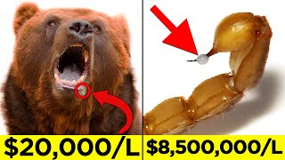 Expensive Fluids Excreted By Animals