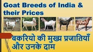 बकरियो की मुख्य प्रजातियाँ और उनके दाम - Goat Breeds of India and their Prices