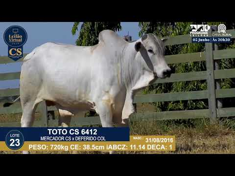 LOTE 23