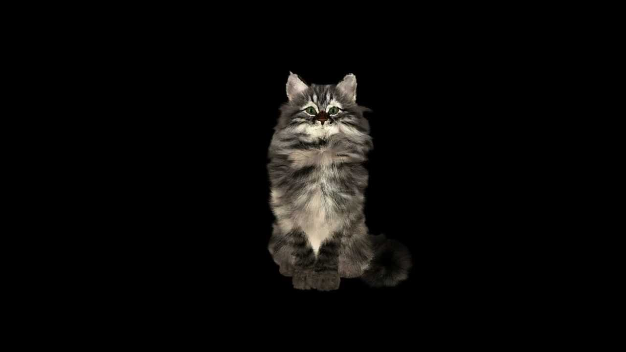 Cat lick flash animation