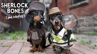 Ep 11: Sherlock Bones & Watley - Cute Dog Detectives Video!