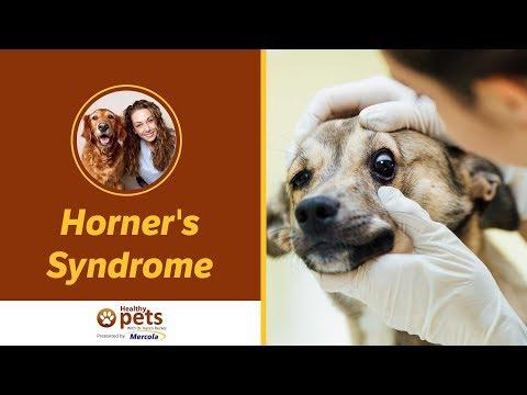 Dr. Becker Dicusses Horner's Syndrome