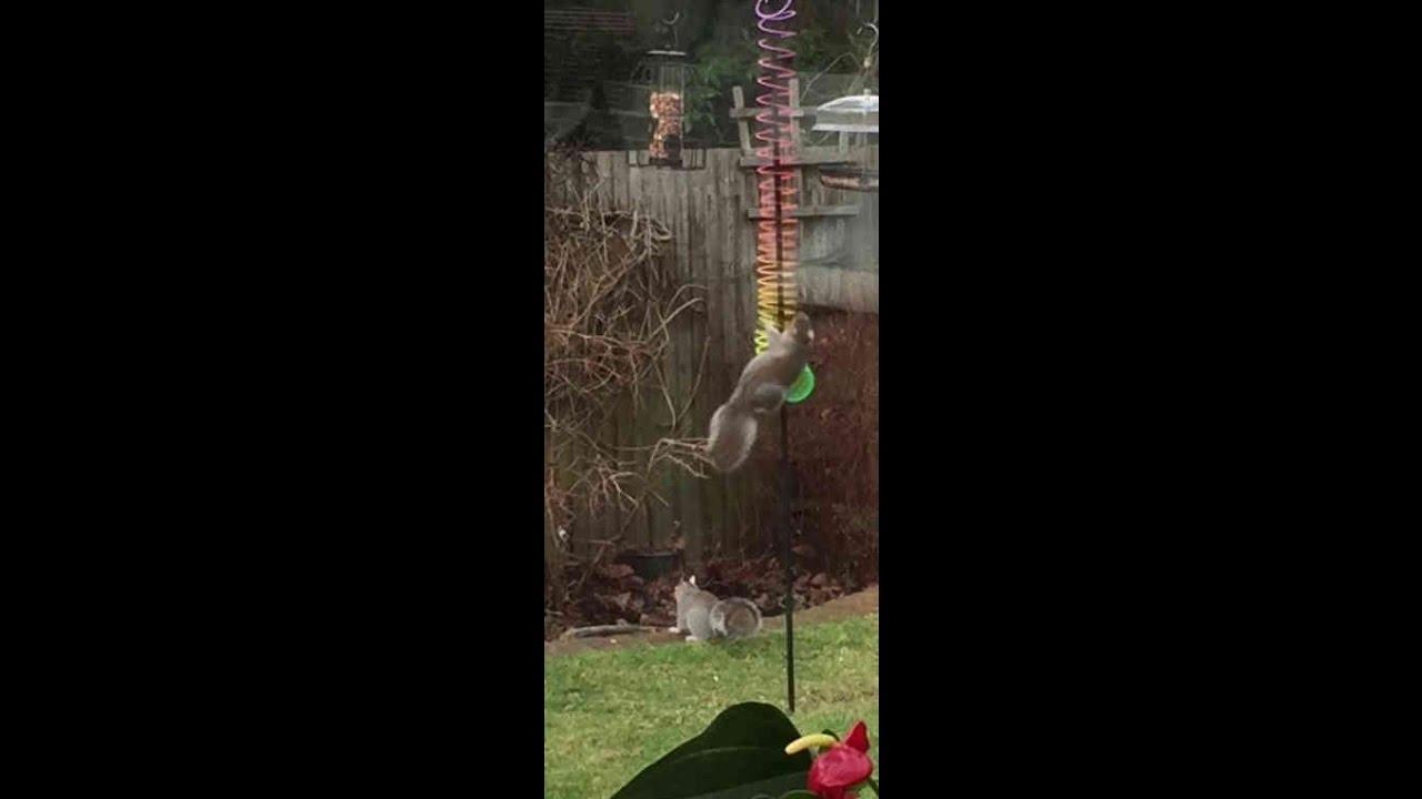 squirrels baffled by slinky on bird feeder youtube. Black Bedroom Furniture Sets. Home Design Ideas