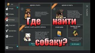 Как найти первую собаку, и других собак. Last Day on Earth: Survival. Обновление 1.7.12.