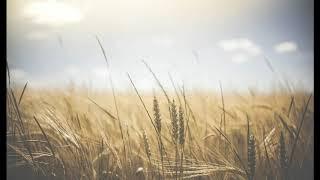 Timo Kulta: Jumalan rauha ja laupeuden teot
