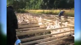 Гуси и утки на выставке водоплавающей птицы в Туле