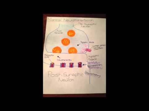THC on Neurons