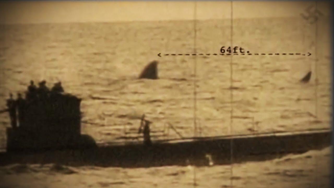 Submarine Shark Caught on Tape - Nazi Photo Siezed During WWII Show 110ft Shark near U Boat ...