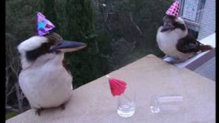 Happy Birthday [Party Birds!]