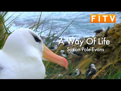 A Way of Life: Suzan Pole-Evans