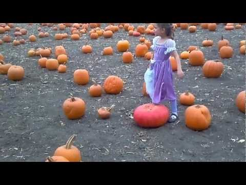 "Dramatic 5-year old asks for ""assistance"" in the pumpkin patch"