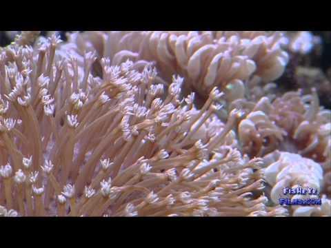 Correct Waterflow in your Reef Aquarium