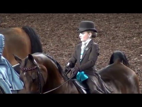 Kaitlyn Hummel & Twister, 2015 Morgan Grand National & World Championship Horse Show, Class-124