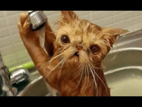 Funny ANIMALS and FAILS COMPILATION - Let's LAUGH together!