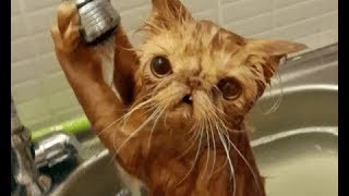 Funny ANIMALS and FAILS COMPILATION - Let