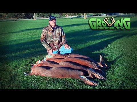 Bow Hunting Whitetails: Red Hot Doe Patrol (#309) @GrowingDeer.tv