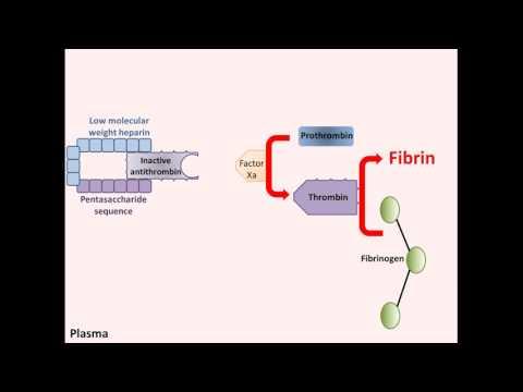 Mechanism of action of heparin
