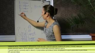Задачи по генетике: Сцепление и кроссинговер 1