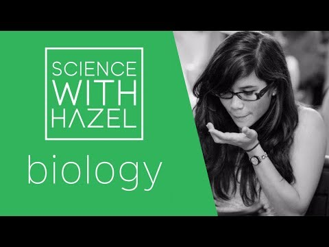 Genetic Engineering - GCSE Biology Revision- SCIENCE WITH HAZEL