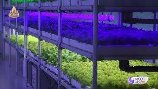 สวทช-นำวิจัยขับเคลื่อนพืชผักสมุนไพรไทย-2-เม-ย-62-เรื่องง่ายใกล้ตัว-9-mcot-hd