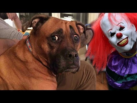 Funny Dogs Scared of Masks Compilation NEW
