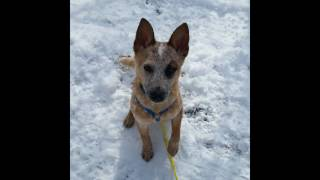 ACDRA Snow Paws - Availabe in NH