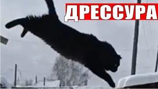 Дрессировка кошек умные животные / Training cats smart animals