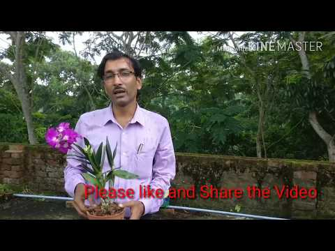 How to make Orchid Potting mix at your home free of Cost.