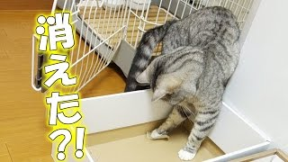 【猫 かわいい おもしろ】猫マジシャンが自分の技に驚く - the magician cat -