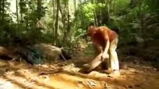piton reticulada y  la anaconda