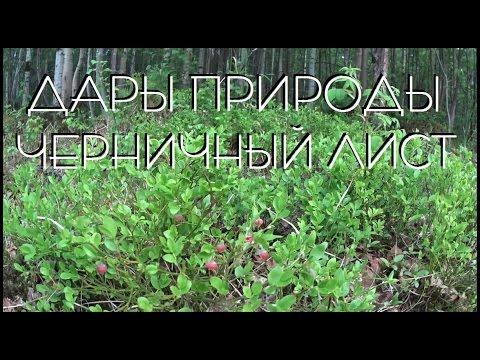 дары природы / черничный лист / фитнес продукт