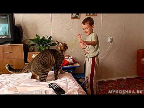 Кошки нападающие и царапающие своих хозяев!
