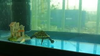 알지이터  쿠터 거북이 공생인가요