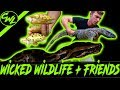 HUNTING FOR PYTHONS & CHECKING OUT CRAZY REPTILES!