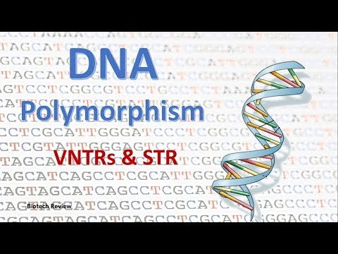 DNA Polymorphism   VNTR   STR