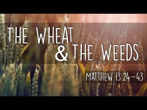 Parable of the Wheat & the Weeds
