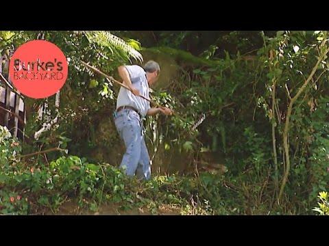 Burke's Backyard, War On Weeds