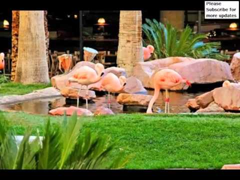Flamingo check out online