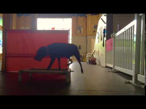 Send Away Lesson!  Advanced Dog Trainers in Northern Virginia | Obedience