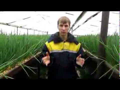 Как сделать чиполлино из лука своими руками фото