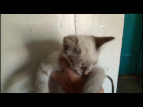 Как лечить глаза  котёнку, Слезиться глаз у котёнка